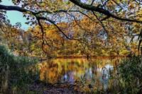 Clove Lakes Park in Autumn A Fine-Art Print