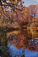 Clove Lakes Park in Autumn B Fine-Art Print
