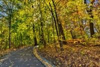 Clove Lakes Park in Autumn D Fine-Art Print
