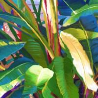 Palm Impressions B 8 Fine-Art Print