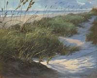 Glistening Sea Oats Fine-Art Print
