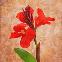 Fantasy in Red I Fine-Art Print