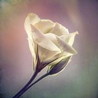 Flowering Into Light A Fine-Art Print