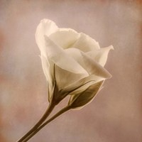 Flowering Into Light B Fine-Art Print