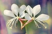 Floral Palette I Fine-Art Print