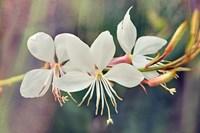 Floral Palette II Fine-Art Print
