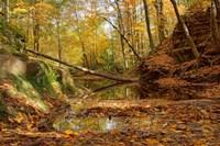 Fallen Tree Fine-Art Print