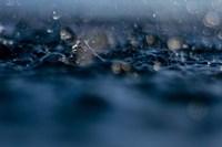 Delight In Rain Fine-Art Print