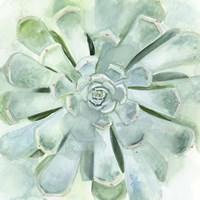 Verdant Succulent IV Fine-Art Print