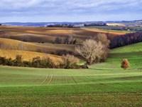 Pastoral Countryside XVII Fine-Art Print