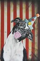 Party Dog I Fine-Art Print