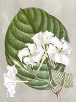 Alabaster Blooms I Fine-Art Print