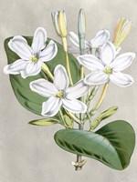 Alabaster Blooms II Fine-Art Print