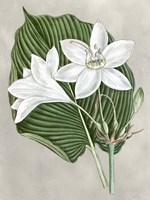 Alabaster Blooms III Fine-Art Print