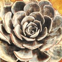 Echeveria Fine-Art Print