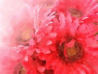 Red Gerbera Fine-Art Print