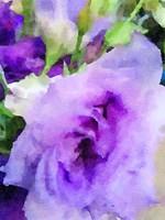 Purple Flower 1 Fine-Art Print