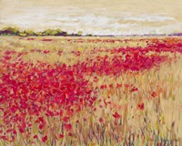 Poppies' Evening Light I Fine-Art Print