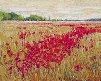 Poppies' Evening Light II Fine-Art Print