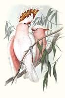 Pastel Parrots I Fine-Art Print