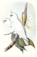 Pastel Parrots II Fine-Art Print