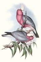 Pastel Parrots III Fine-Art Print