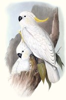 Pastel Parrots V Fine-Art Print