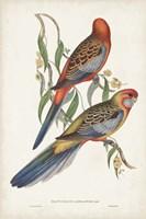Tropical Parrots II Fine-Art Print