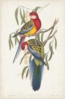 Tropical Parrots IV Fine-Art Print