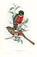 Tropical Trogons V Fine-Art Print