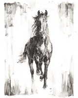 Rustic Black Stallion I Fine-Art Print