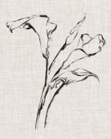 Floral Ink Study IV Fine-Art Print