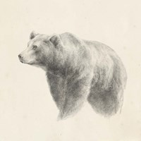 Western Bear Study Fine-Art Print