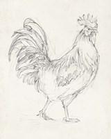 Rooster Sketch I Fine-Art Print