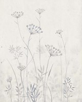 Neutral Queen Anne's Lace I Fine-Art Print