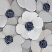 White Anemone I Fine-Art Print
