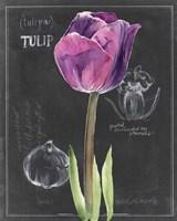 Chalkboard Flower IV Fine-Art Print