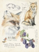 Wildlife Journals III Fine-Art Print