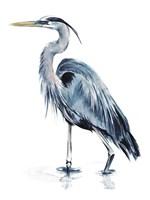 Blue Blue Heron II Fine-Art Print