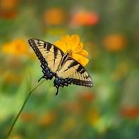 Butterfly Portrait I Fine-Art Print