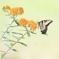Butterfly Portrait III Fine-Art Print