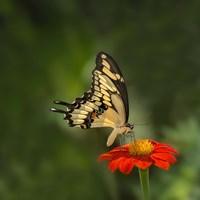 Butterfly Portrait V Fine-Art Print