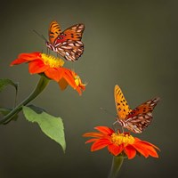 Butterfly Portrait VI Fine-Art Print