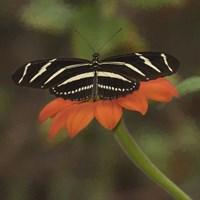 Butterfly Portrait VII Fine-Art Print