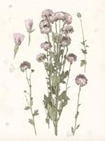 Pressed Blooms I Fine-Art Print