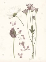 Pressed Blooms II Fine-Art Print
