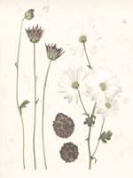 Pressed Blooms IV Fine-Art Print