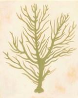 Deep Sea Coral II Fine-Art Print