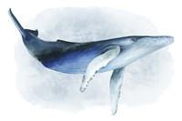 Watercolor Humpback I Fine-Art Print