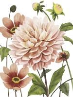 Dahlia Spell I Fine-Art Print